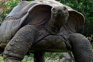 tortue2